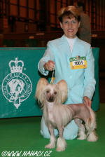 Ch. KITTY z Haliparku na Crufts 2008